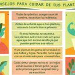 Consejos para cuidar tus plantas